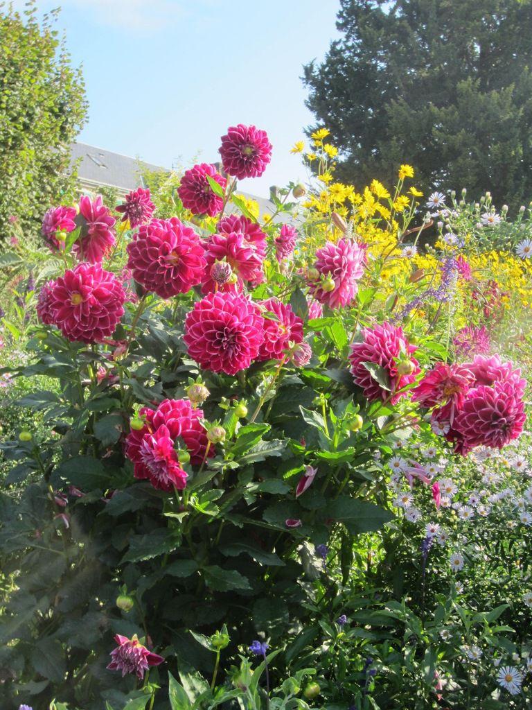 Week end à la campagne au milieu des fleurs de...