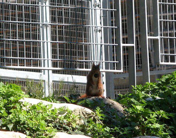 le magnolia et l'écureuil.....