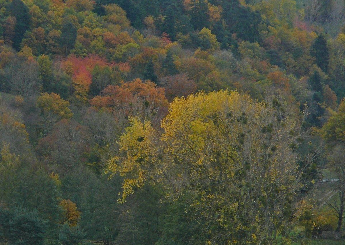 Papotage d'automne
