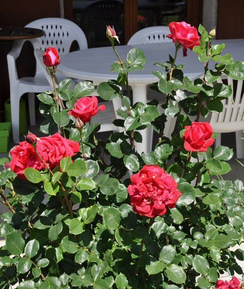 « Un simple regard posé sur une fleur et voilà une journée remplie de bonheur » (Céline Blondeau)