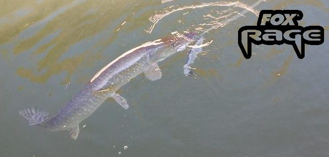 Pike attack !