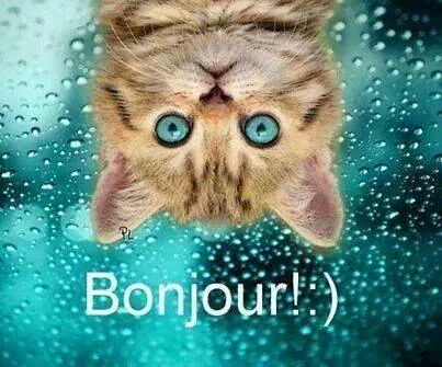 Topic des chats - Page 17 Ob_89fc55_img-218062407875940