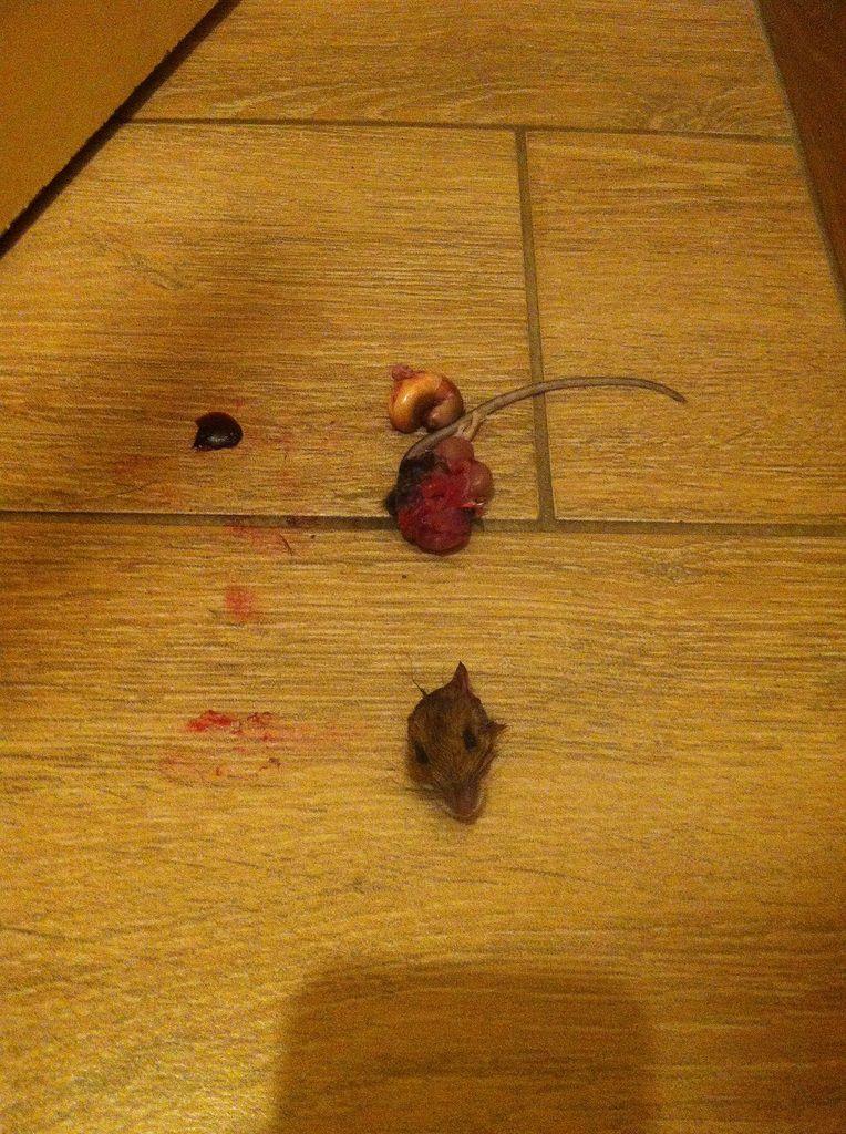 On dit merci à Jack pour ce chouette cadeau, la souris-puzzle à remettre dans l'ordre &#x3B;-)))
