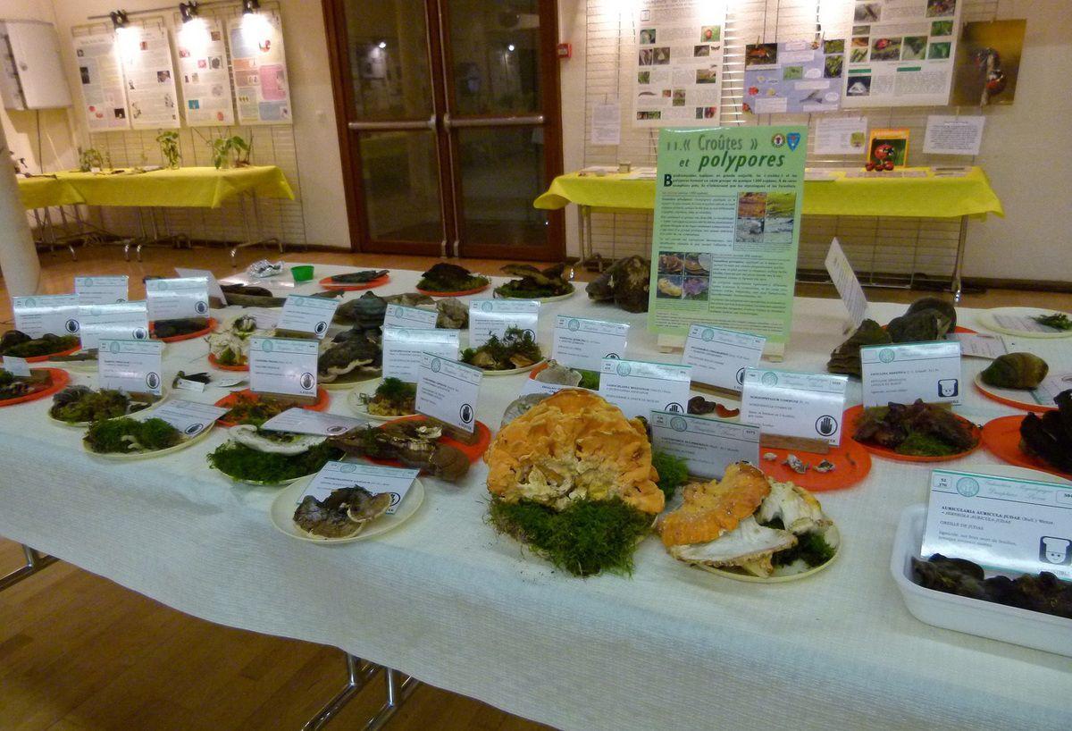 L'Exposition d'automne du Groupe Nature de Faverges 24-25-26 septembre 2016 (1)
