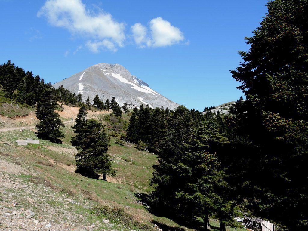 Mont Delfi - Pivoine, Paeonia mascula ssp helenica