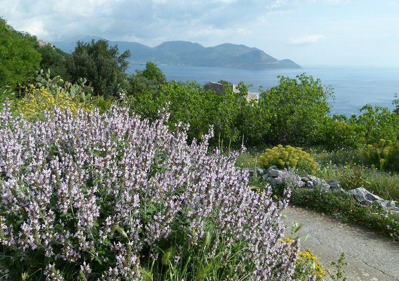 Dans le Péloponnèse avec Pascal Jarige (4) – Encore quelques plantes vues à Viglas
