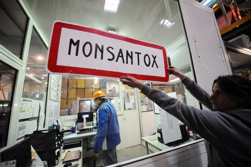 Monsanto traduit devant un tribunal international citoyen à La Haye