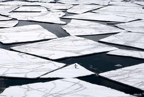 Un manchot Adélie sur la mer de Ross. JOHN WELLER / AFP