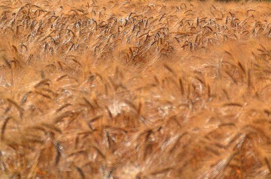 «Un nouveau contrat se dessine entre l'agriculture et la société. Fondé sur l'agroécologie et valorisé grâce à la HVE, ce contrat redonne un rôle central aux agriculteurs, et permet aux exploitations agricoles de retrouver une dynamique économique positive en attirant de nouveaux talents». Lymatly Photos/Flickr/CC BY 2.0