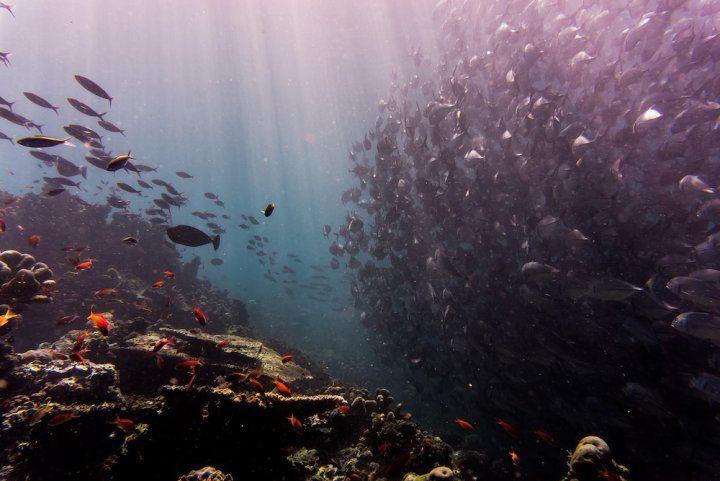 Les Nations unies s'attaquent à la surpêche dans les océans