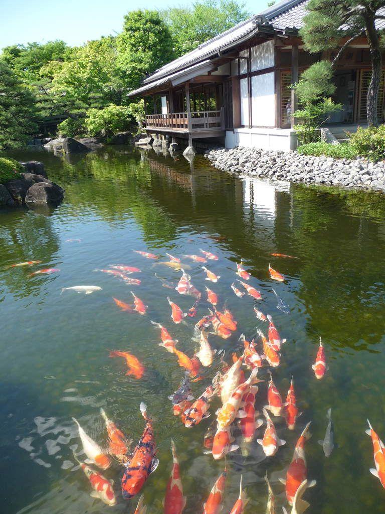Carpes dans le bassin du jardin Koko-en à Himeji
