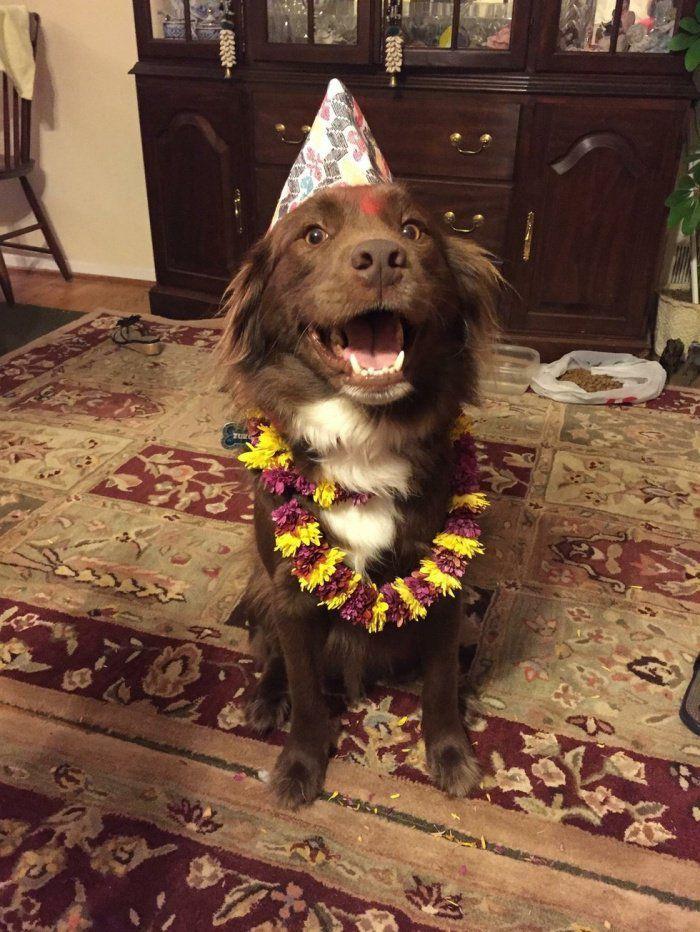 Népal: un festival qui remercie les chiens d'être nos amis