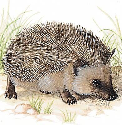 illustration du larousse