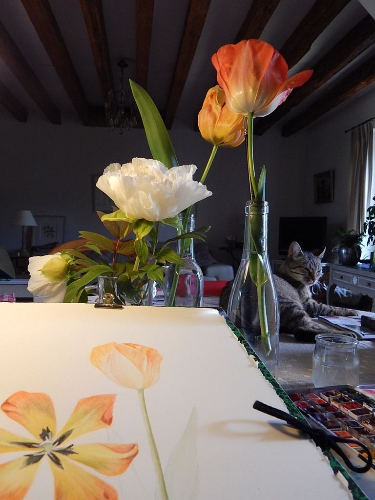 Invitation des tulipes...