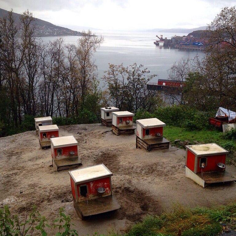La Laponie suèdoise et les chiens de traineau