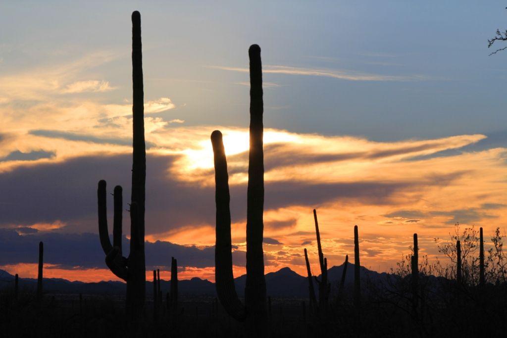 Couchers soleil - Parc national SAGUARO - Arizona