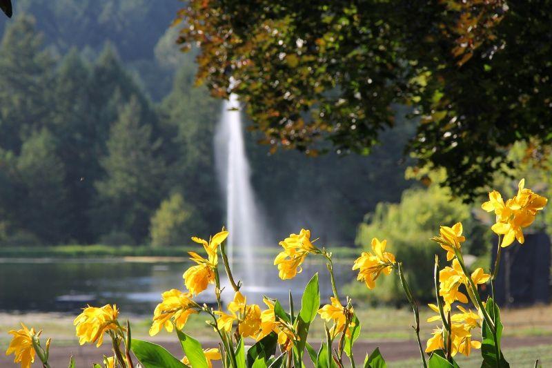 Fleurs jaunes du parc Burchart Garden - Canada