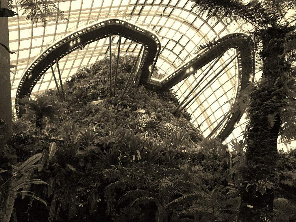 Cloud Forest Garden of the bay Singapour