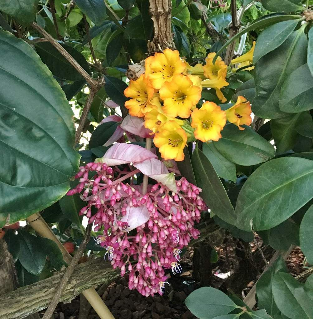 Les fleurs à la Cloud Forest Singapour