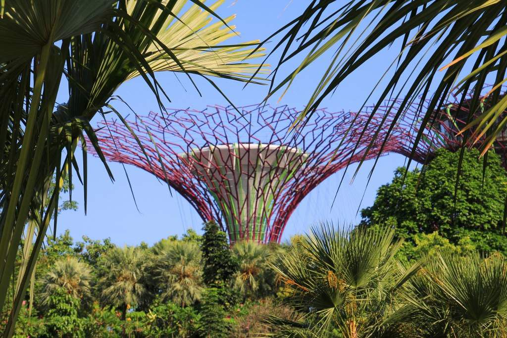 Supertree grove - Garden of the bay Singapour