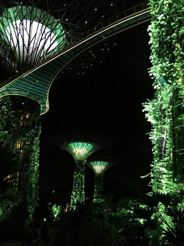 Supertree grove by night Son et lumière Singapour