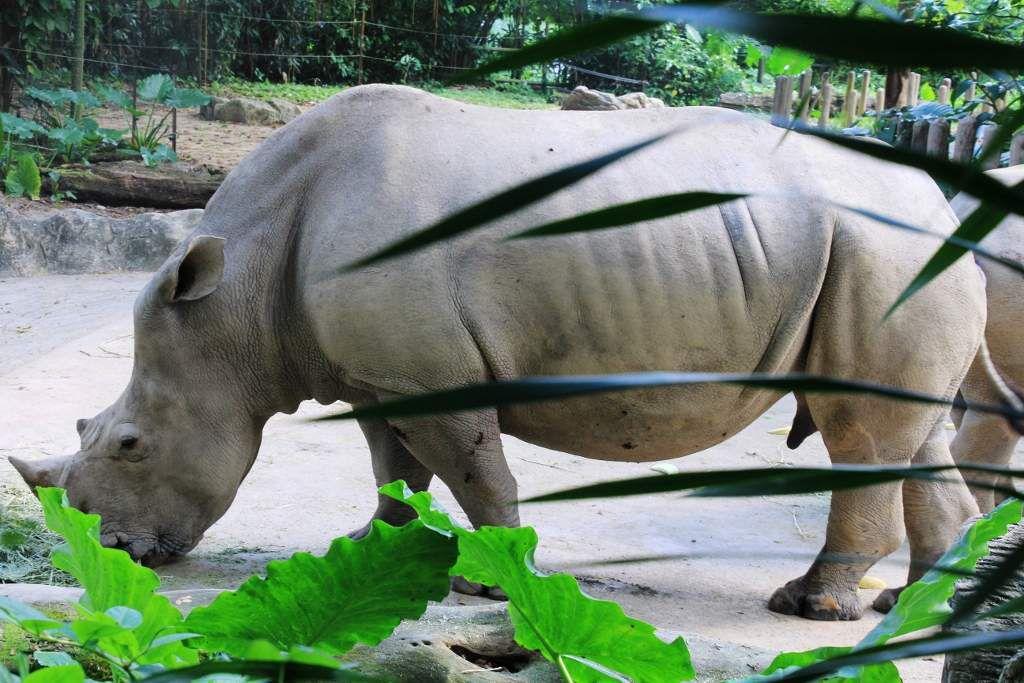 Zoo de Singapour *