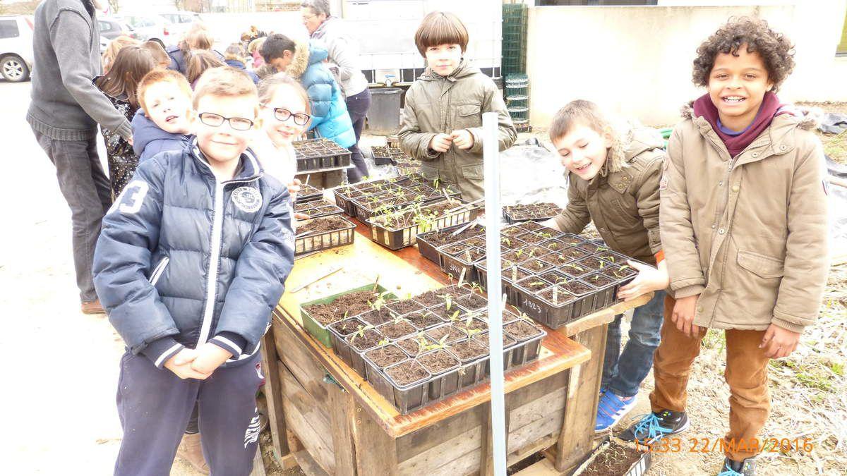 Les CE2 ont bien compris à présent la différence entre semer des graines et planter des jeunes plants.