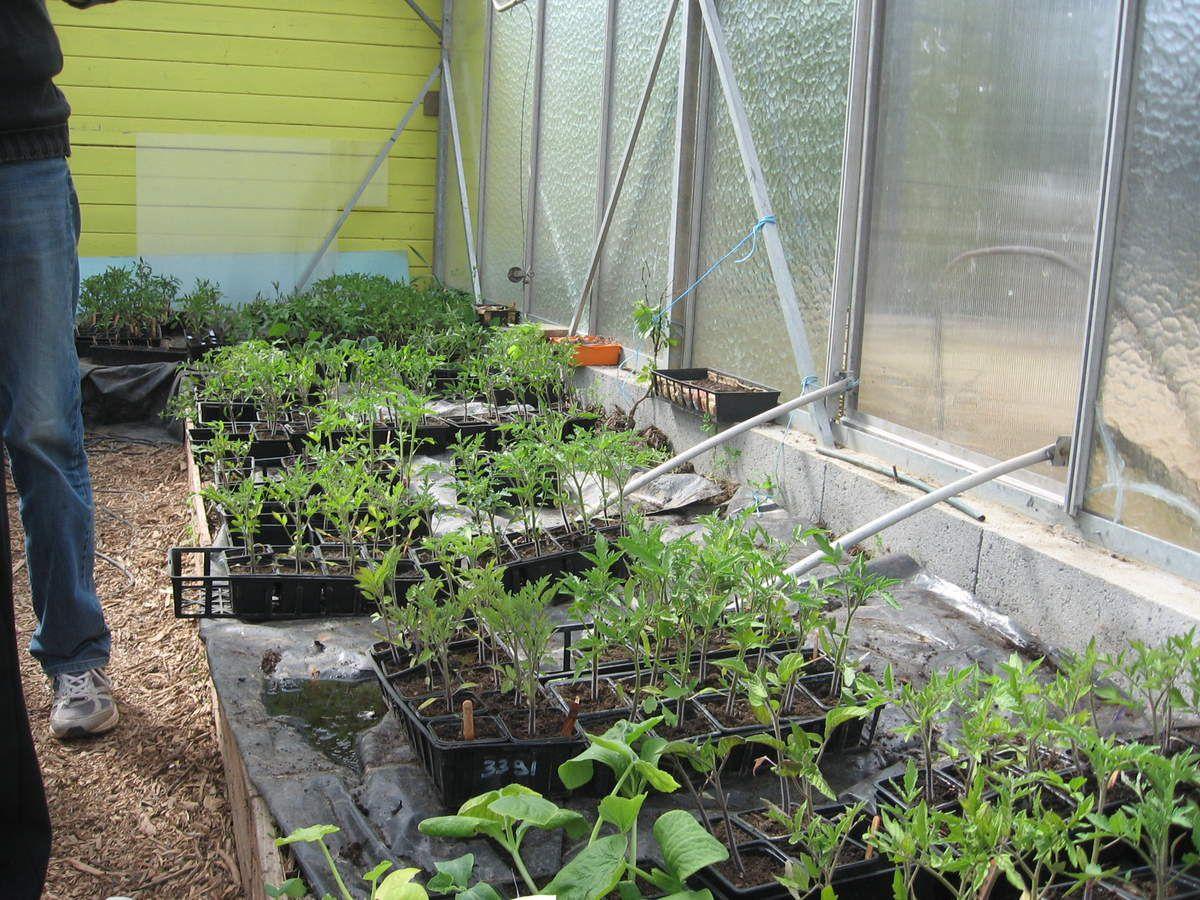 Jardin des 4 saisons plants le blog de l 39 cole nd de for Jardin 4 saisons