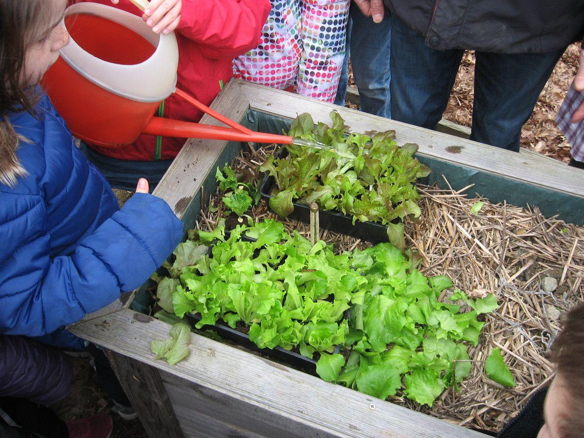 jardin des 4 saisons la salade est plant e le blog de l 39 cole nd de lourdes. Black Bedroom Furniture Sets. Home Design Ideas