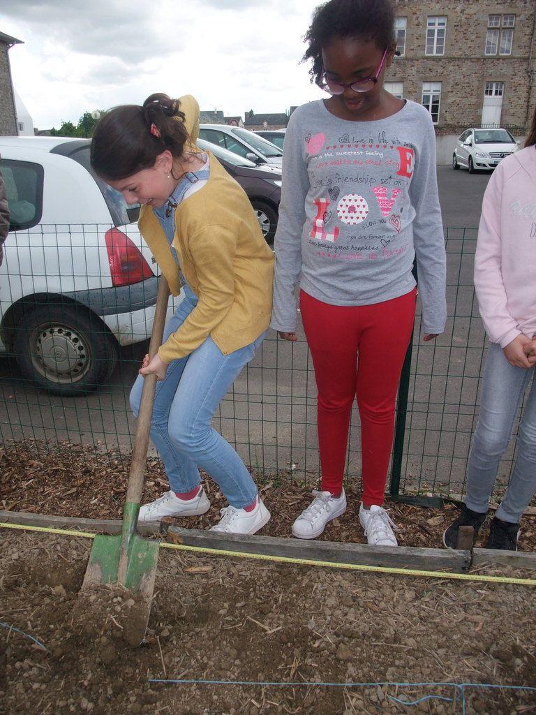 Jardin des 4 saisons les pommes de terre sont plant es for Jardin 4 saisons eckwersheim