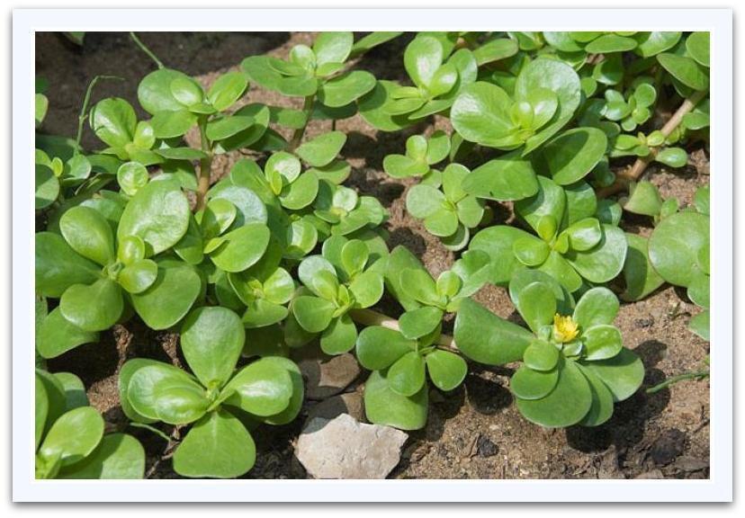 Sortie botanique ou à la recherche des herbes sauvages