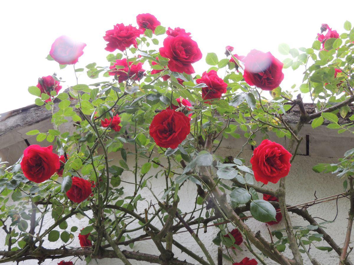 Encore quelques unes au jardin le blog de bricabrocamoi for Jardin encore