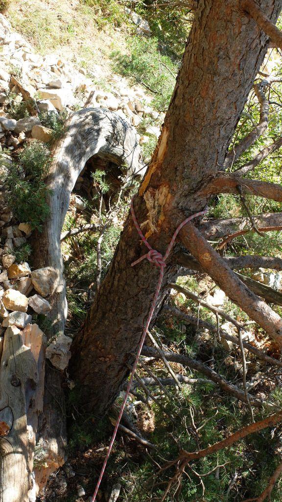 R0 sur le pin marqué par mes purges, compagnon de mes aventures solitaires mon sac à R1.