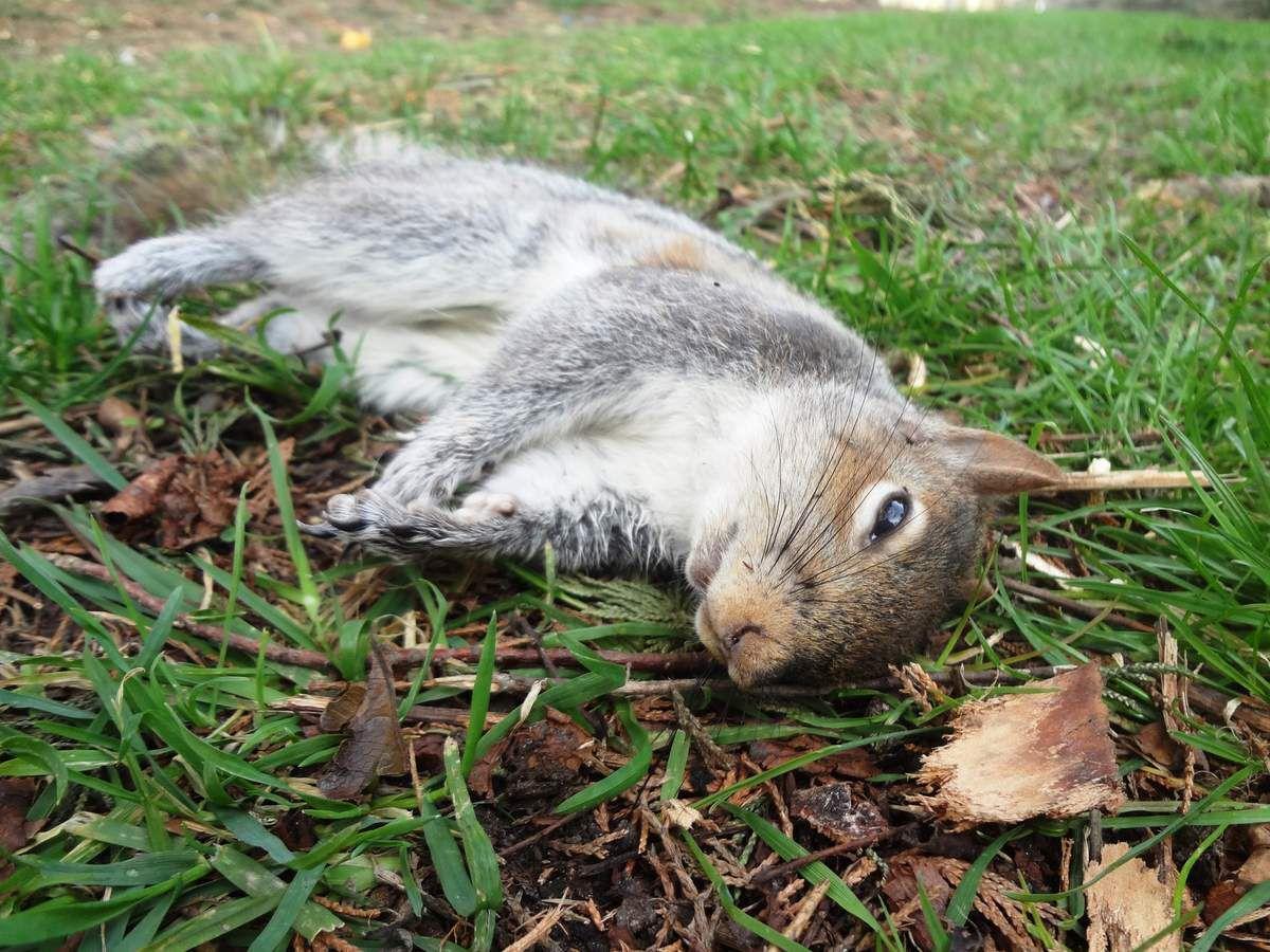 Uno scoiattolo in transito