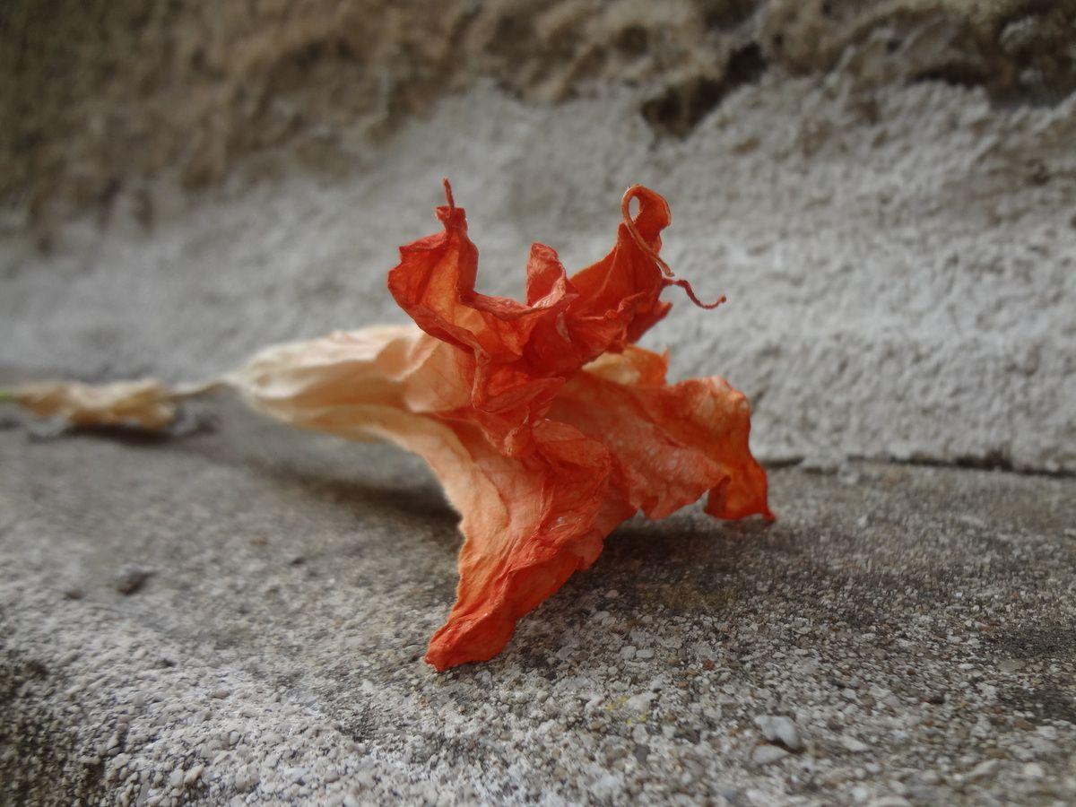 Il fascino discreto dei fiori caduti