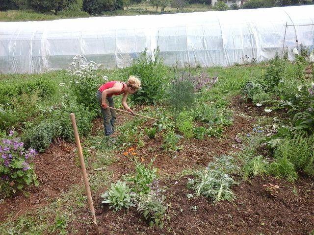 Entretien du jardin sur buttes par Clotilde, en woof....