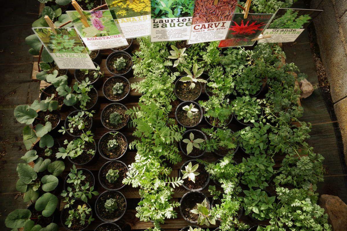 Plants et leurs affichettes descriptives - mai 2016
