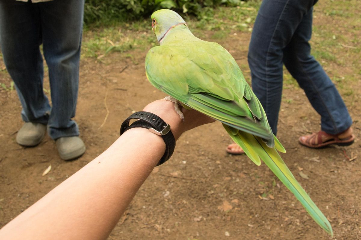 Le parc des perroquets