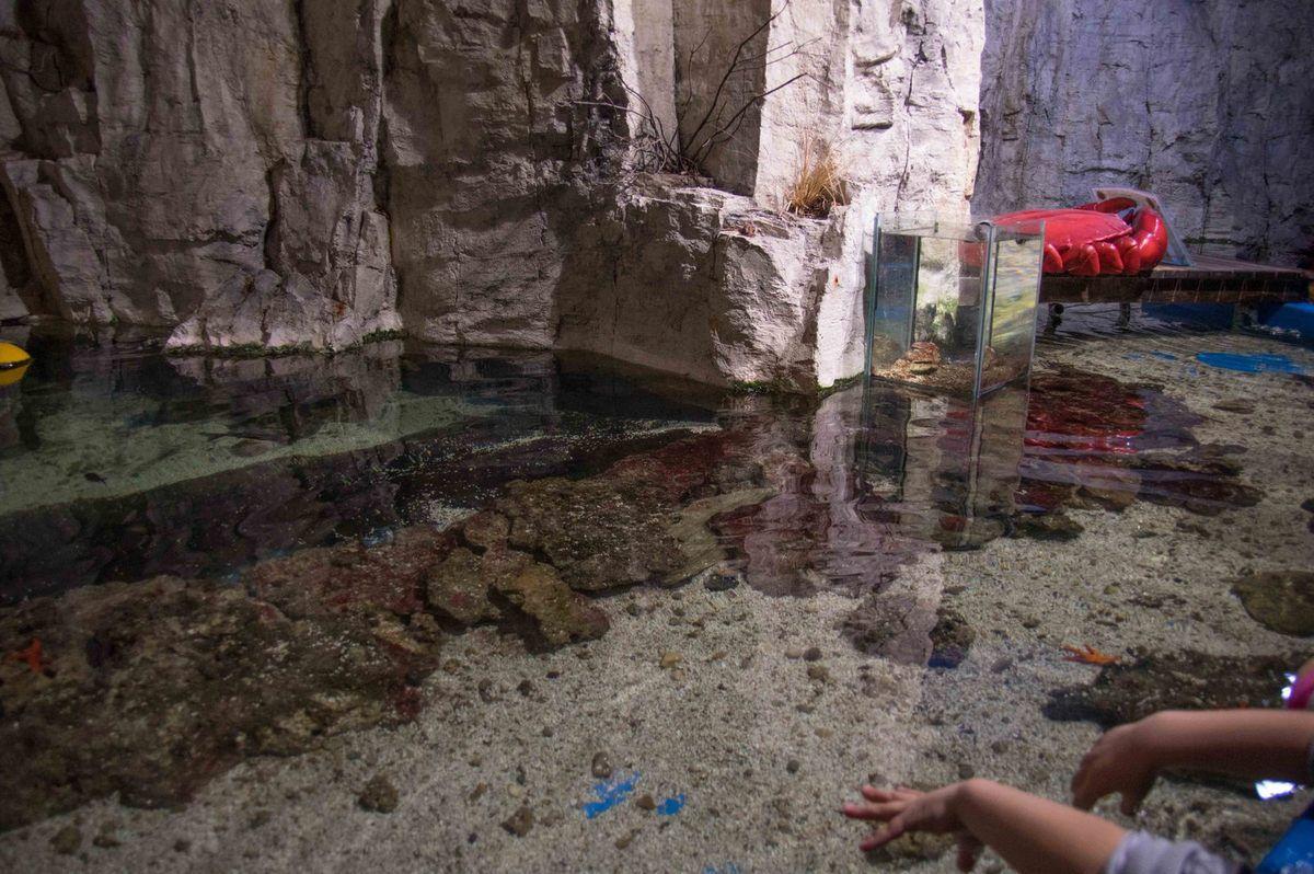 Visite de l'aquarium de Lyon (Rhône)