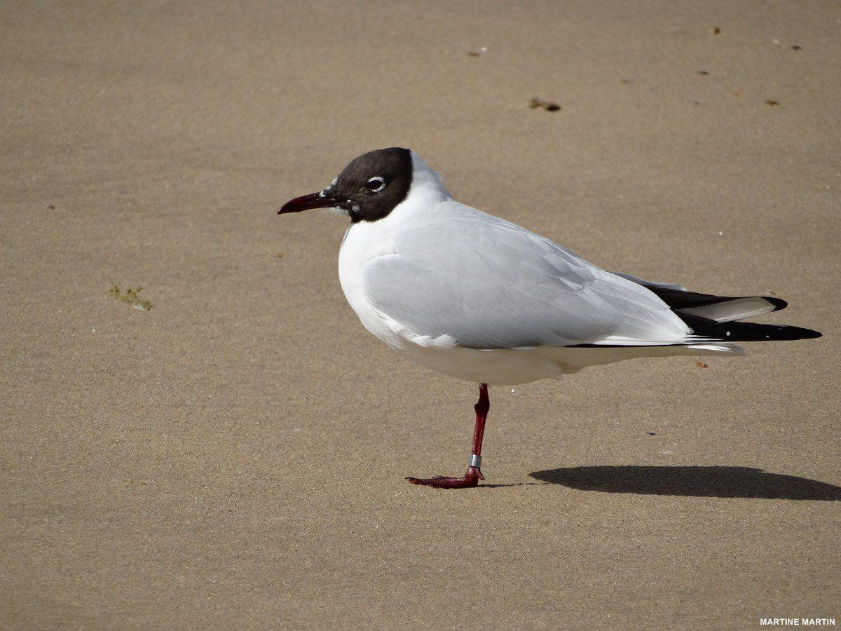 Oiseaux de mer sur la plage des Sables d'olonne