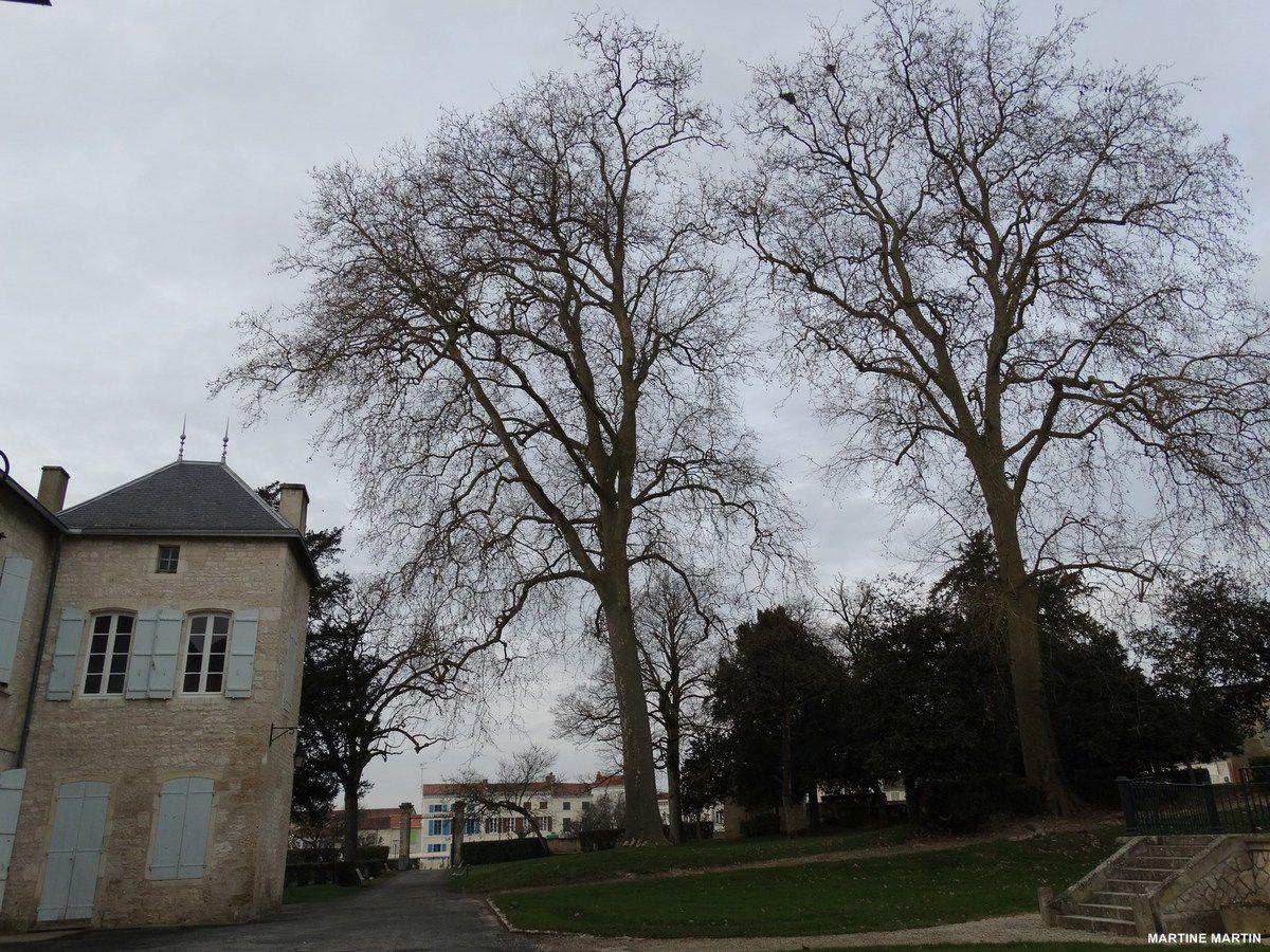 Le château de Surgères (17)