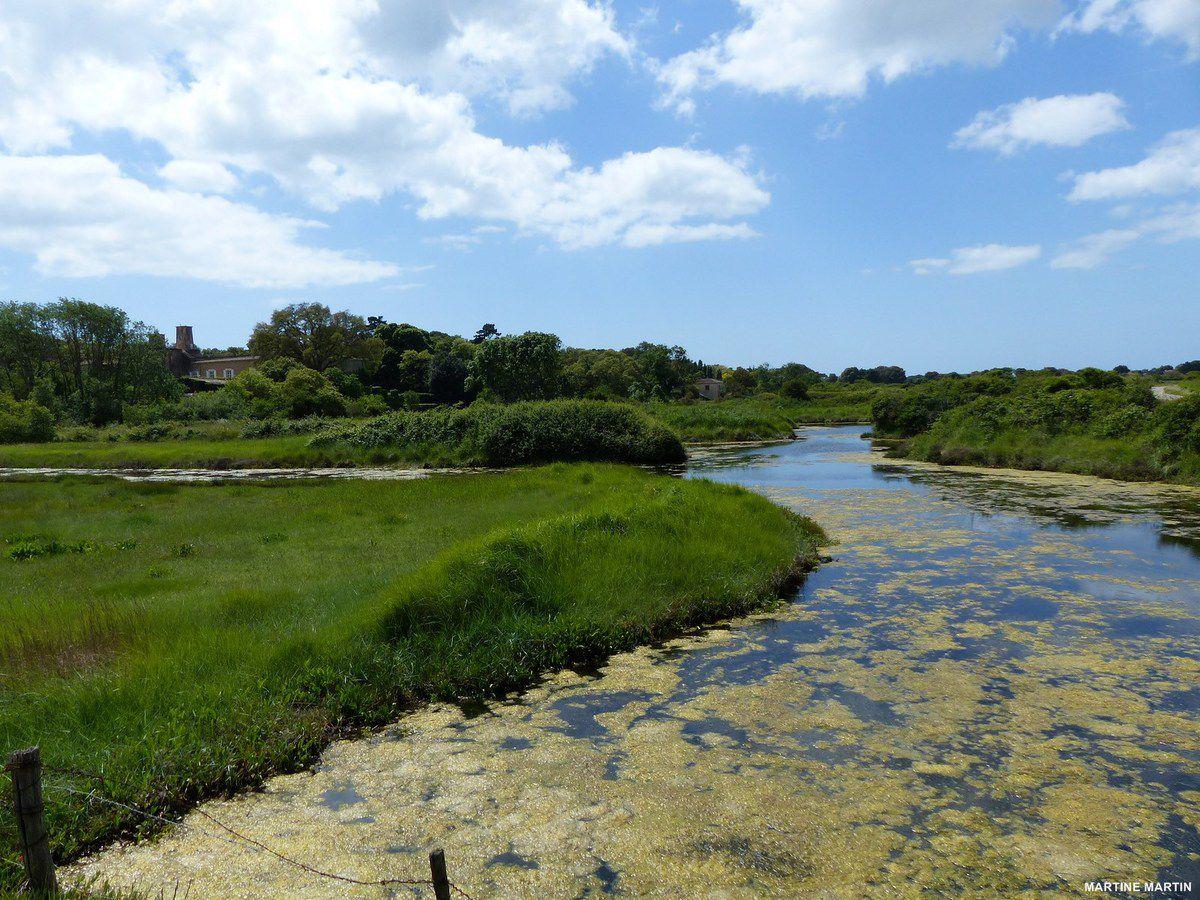 Flore et faune dans le marais de la guittière