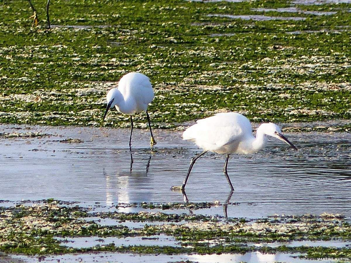 Promenade dans les marais de l'Ile d'Olonne