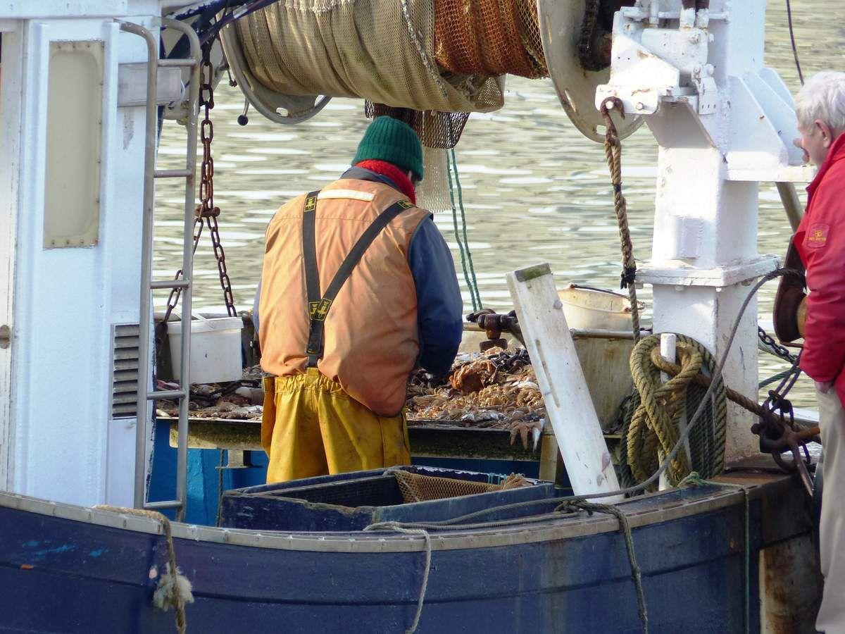 Retour des bateaux : Le bonheur des oiseaux aux Sables