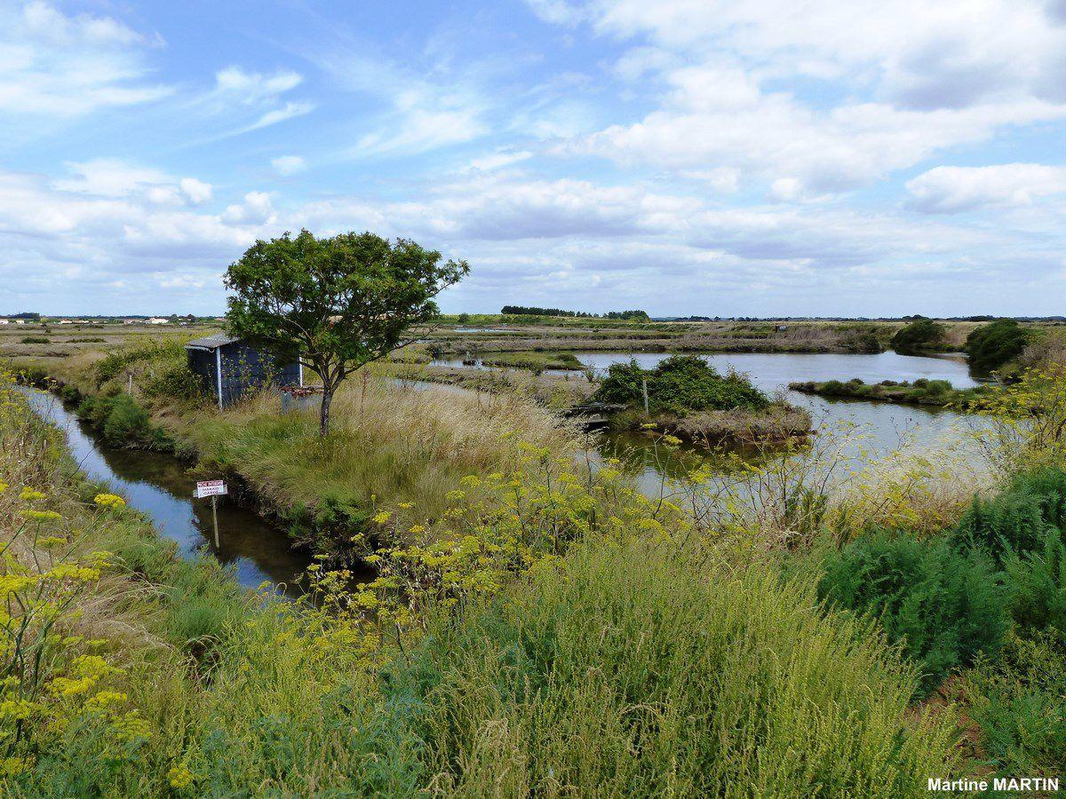 Les marais de la guittière à Talmont Saint-Hilaire