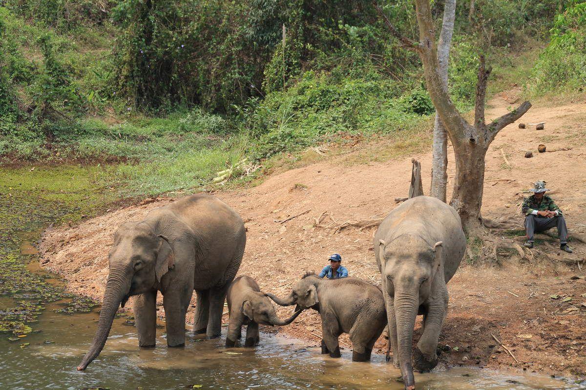 A la rencontre des éléphants...