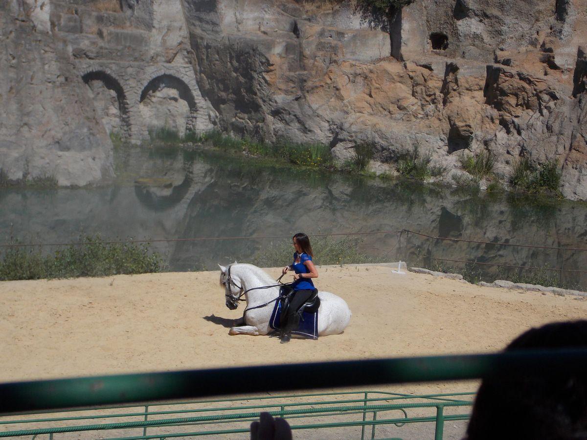 démonstration équestre par ANAIS et son superbe cheval andalou SAMSON