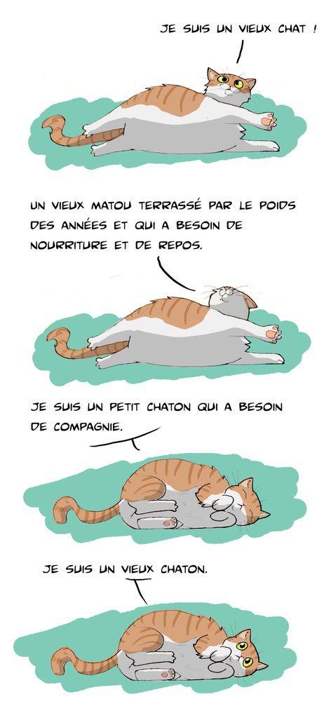 Vénérable chaton