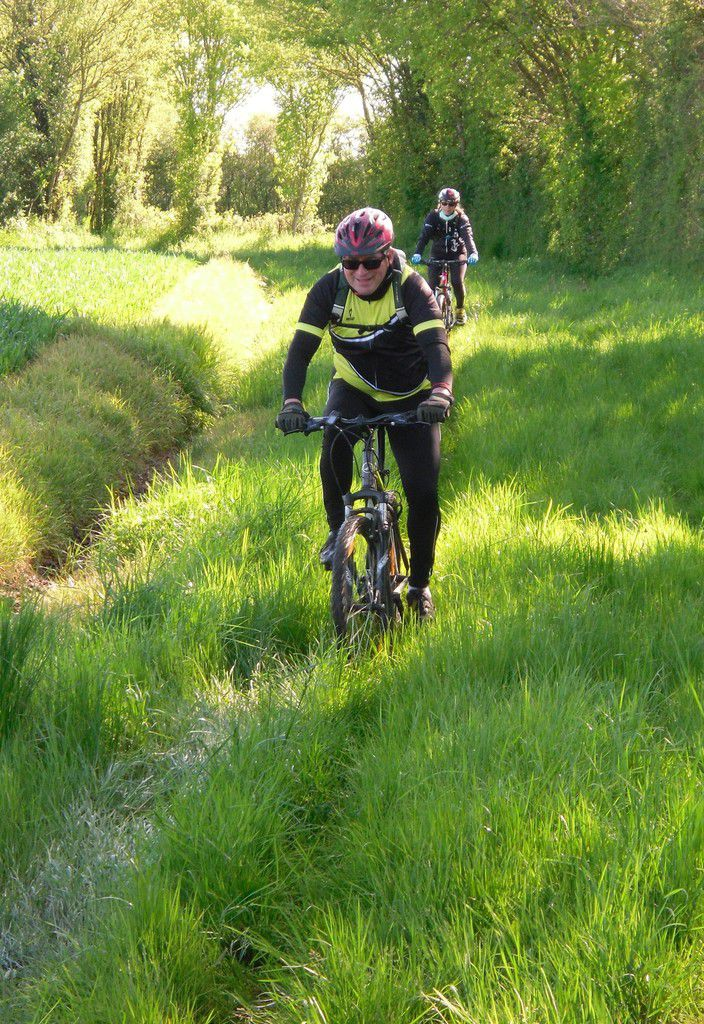 Section VTT de la SEP
