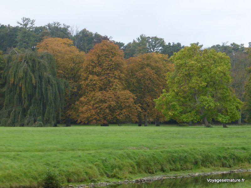 L'automne est bien là avec ses magnifiques couleurs !